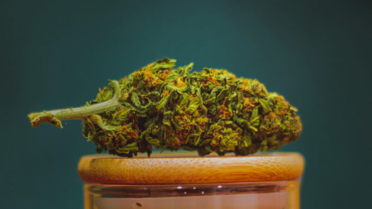 image of cannabis bud