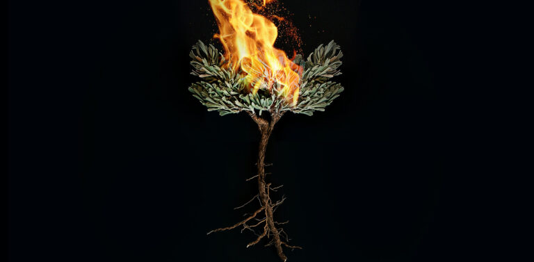 Root tree in fire