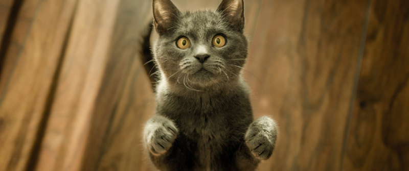 cat with startled expression standing up looking at the camera